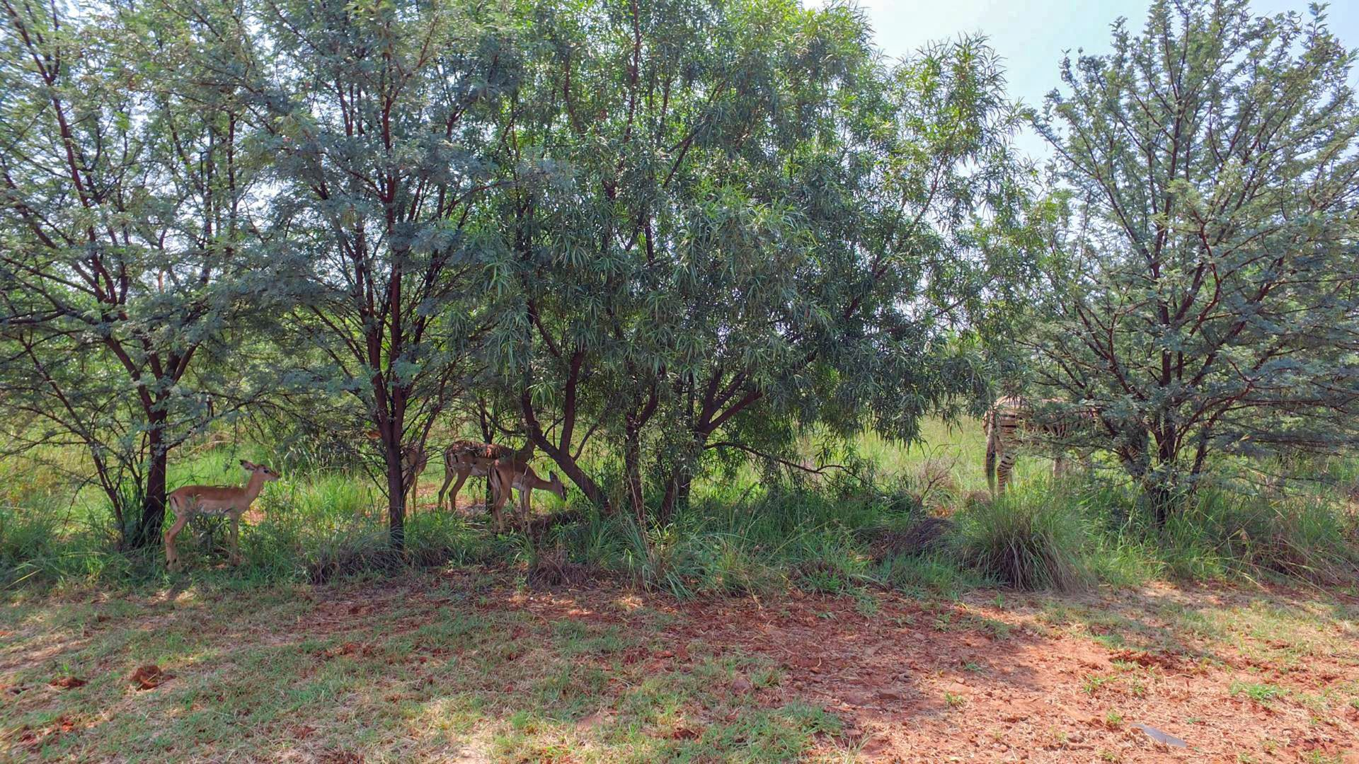 Land in Leloko - Vacant land with wild animals