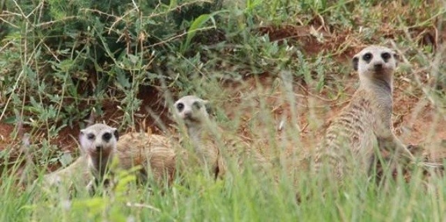 Land in Lekwena Wildlife Estate - Meerkat