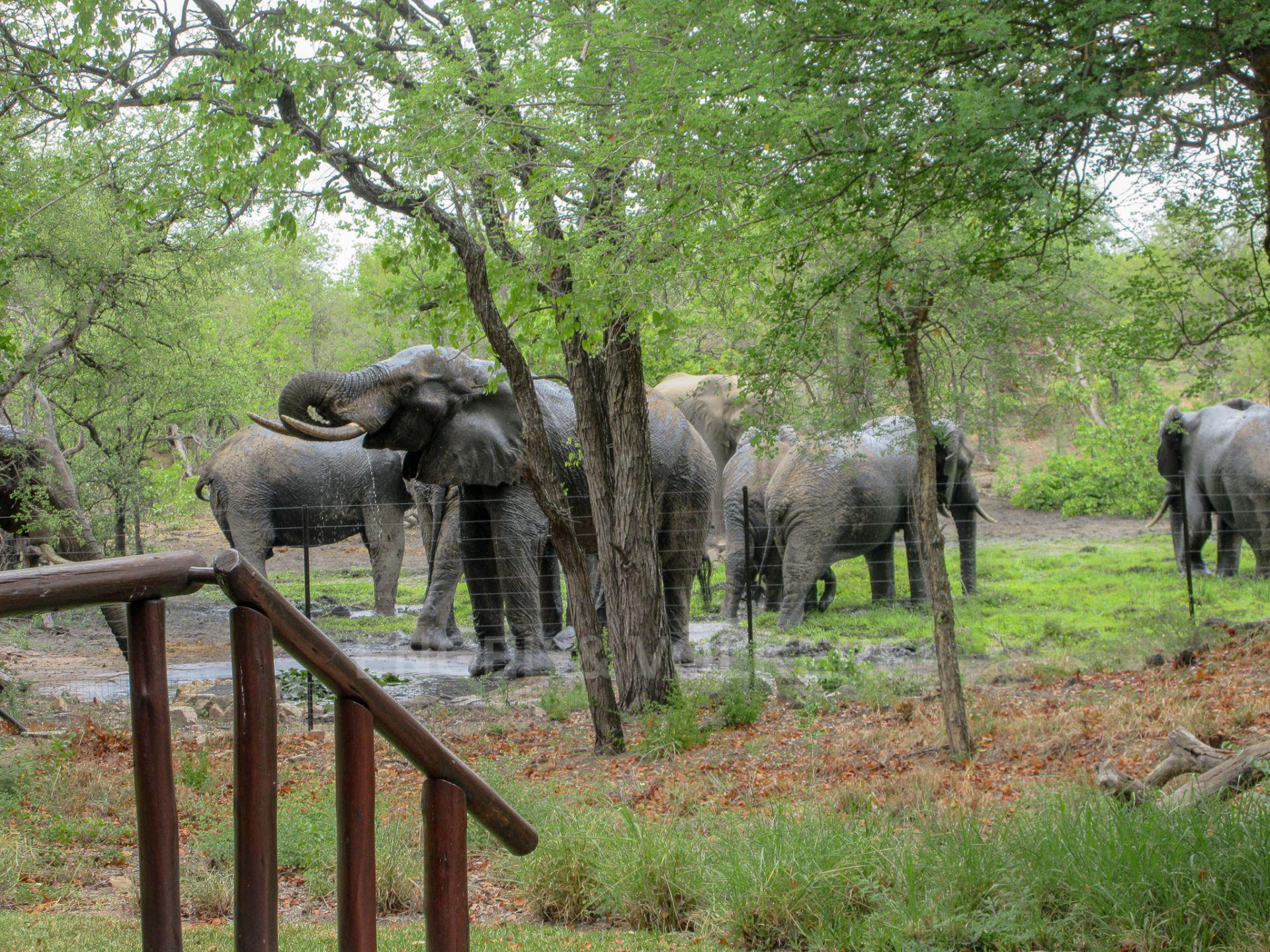 House in Phalaborwa & surrounds - Elephants drinking at the waterhole
