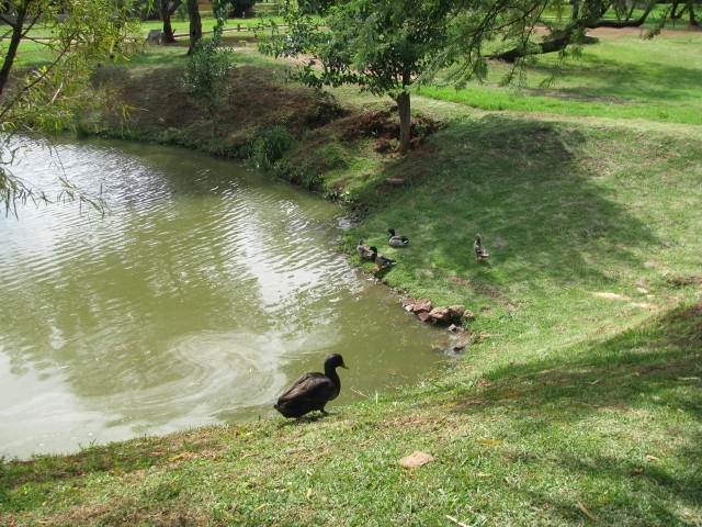 Land in Magalies River Club and Golf Estate - 2013 11 14 16