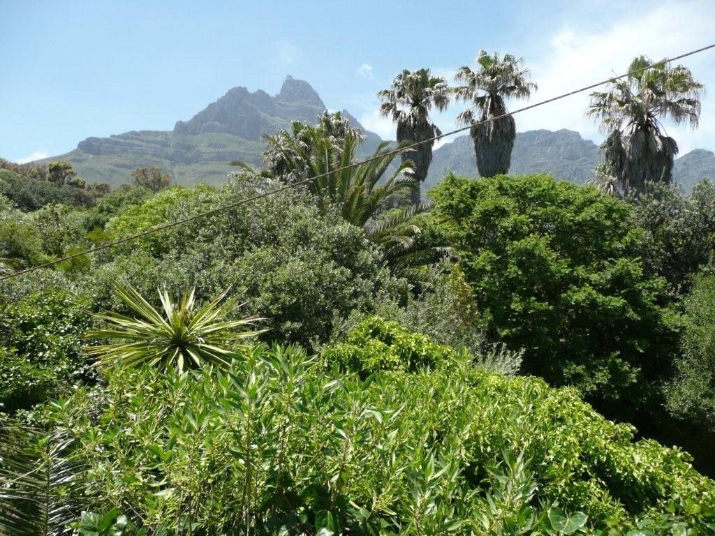 House in Camps Bay - 19.DS BACK VIEW OF GA4RDEN.jpg
