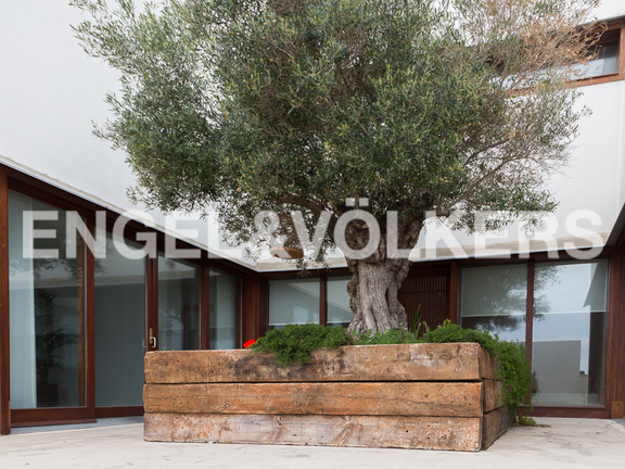 House in Cullera - Olive tree in the entrance of the house