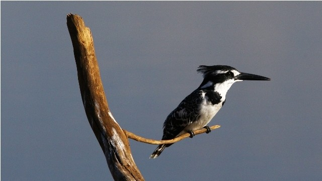 Land in Lekwena Wildlife Estate - King Fisher
