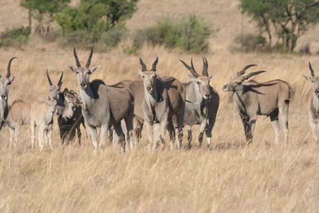 Land in Lekwena Wildlife Estate - Eland Family
