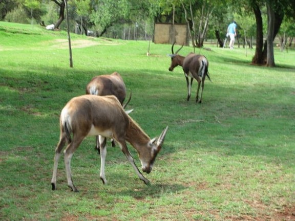 Land in Magalies River Club and Golf Estate - Animal Life