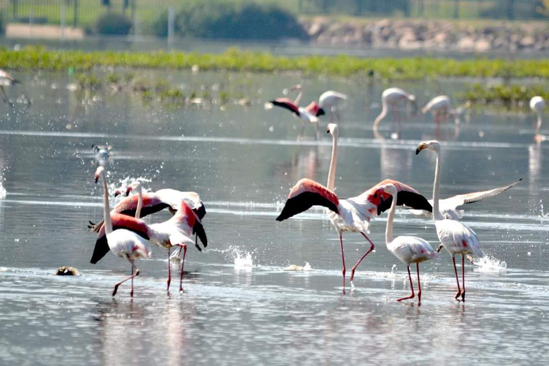 Land in Port Provance - Flamingoes in vlei