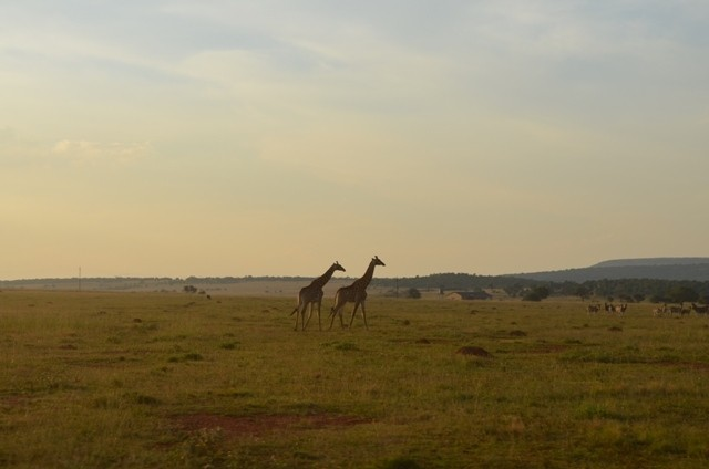 Land in Lekwena Wildlife Estate - Giraffes In Serengeti