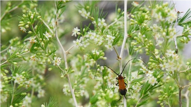 Land in Lekwena Wildlife Estate - Insect On Plant