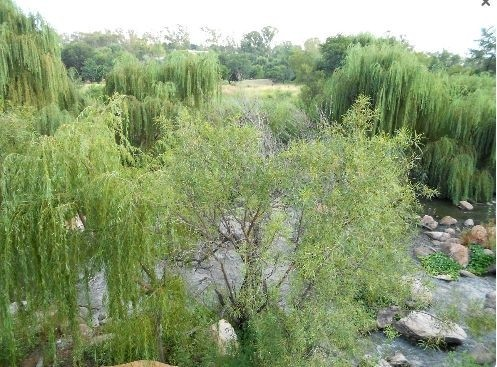 Land in Parys Golf & Country Estate - P14
