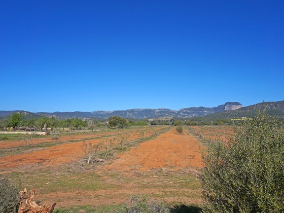 Land in Binissalem - Plot with fabulous views in the center of Mallorca