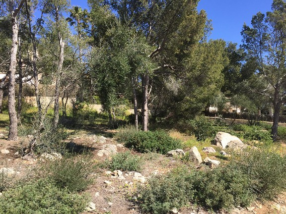 Land in Nova Santa Ponsa - Plot with sea views in Nova Santa Ponsa