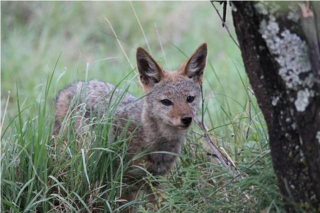 Land in Lekwena Wildlife Estate - Little Jackal