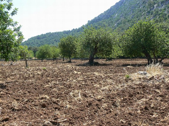 Land in Pollensa