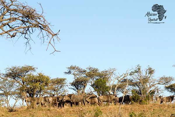 Land in Pongola - wildlife03.png
