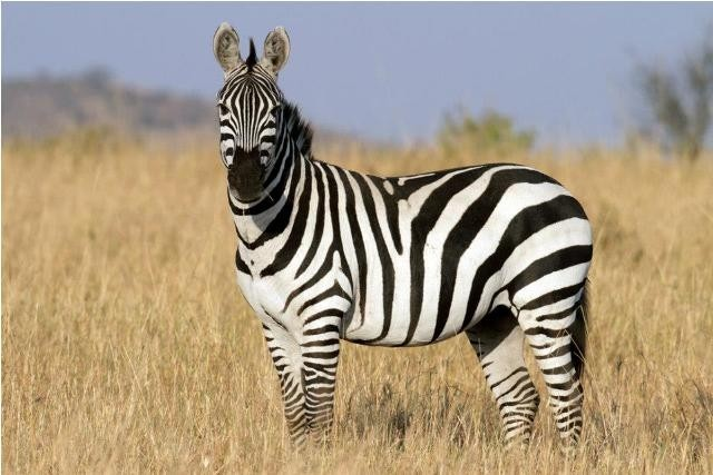 Land in Lekwena Wildlife Estate - Zebra