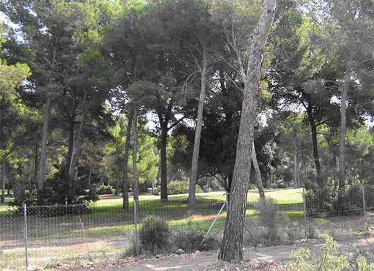 Tranquil plot near golf courses in Santa Ponsa