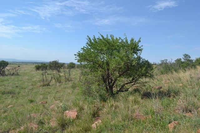 Land in Lekwena Wildlife Estate - 26_Rf70J0e.JPG