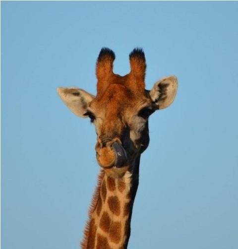 Land in Lekwena Wildlife Estate - Giraffe