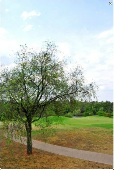 Land in Parys Golf & Country Estate - P23