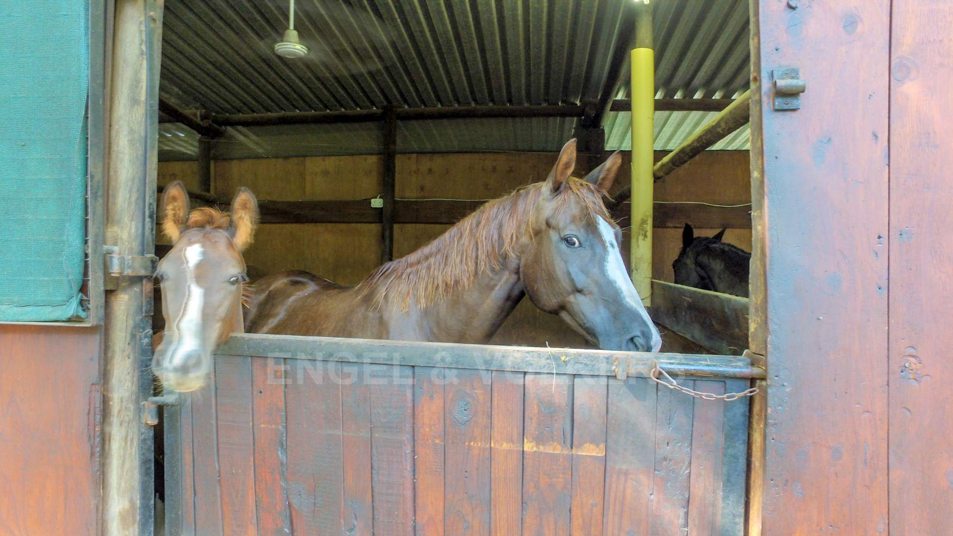 Land in Hartbeespoort Dam Area - Stables