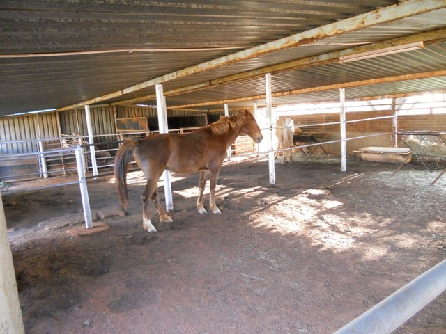 Land in Oudedorp - Horse Facilities