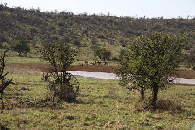 Land in Lekwena Wildlife Estate - 32_MkdHUYD.JPG