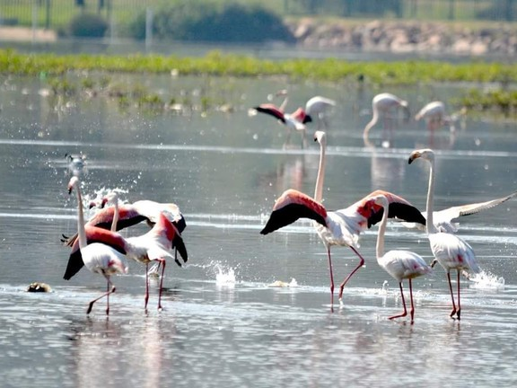 Land in Beau Rivage - Flamingoes in vlei