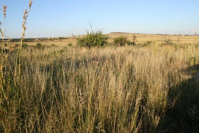 Land in Lekwena Wildlife Estate - 31_YTlQRyC.JPG