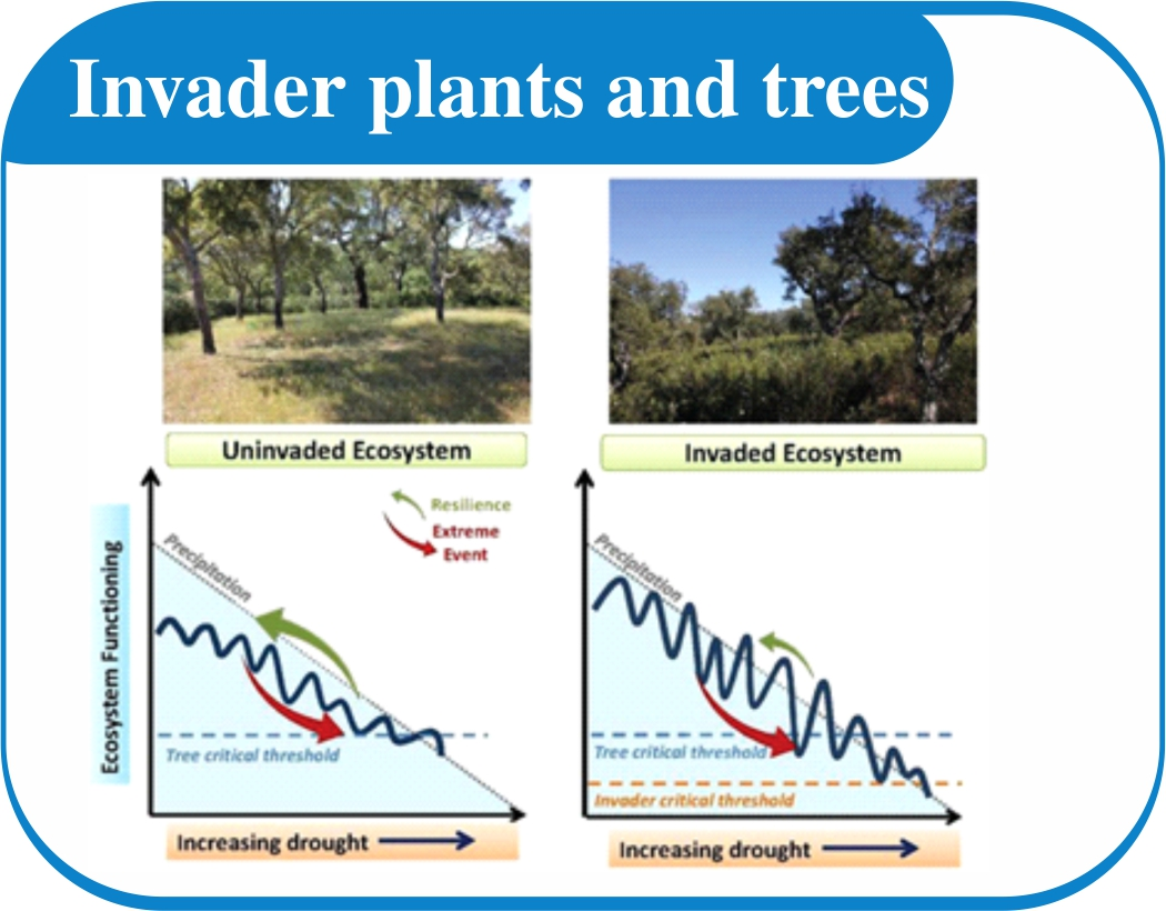 Invader plants and trees can drastically impact your water saving