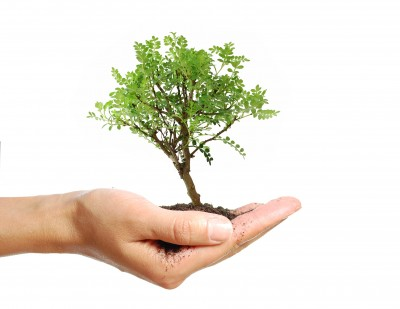 Plant a tree - and add value to your life, environment and property