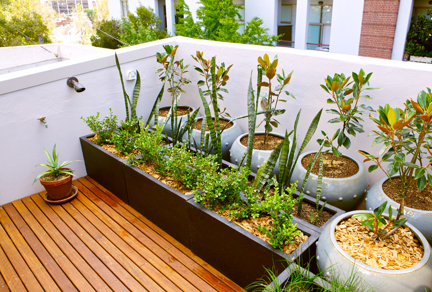 Urban gardening: A new form of self-sufficiency