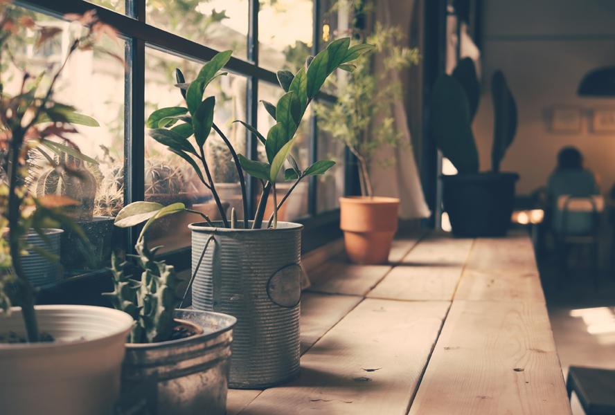 Indoor plants for a pleasant living ambience